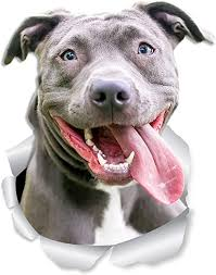 Amazon Com Winston Bear Happy Pit Bull Dog Wall Decals 2 Pack Bully 3d Sticker Decals For Walls Cars Toilet And More Retail Packaged American Bully Gifts Home Kitchen