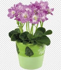 زهور البنفسج الأفريقية وغيرها الأرجواني والزجاج Png