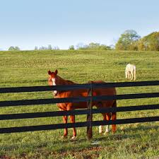 Cenflex Flexible Rail Fence By Centaur Irish Wire Products