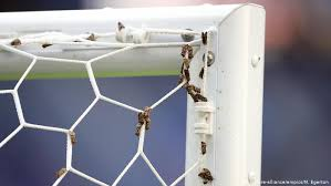 How Can We Keep Mosquitoes And Other Bugs Out Of Our Sports Stadiums Science In Depth Reporting On Science And Technology Dw 19 06 2018