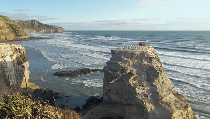 Image result for muriwai beach""