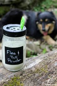 natural flea and tick prevention for