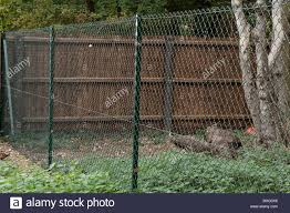 Metal Fencing Plants High Resolution Stock Photography And Images Alamy