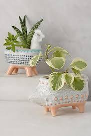 ping home gardening essentials
