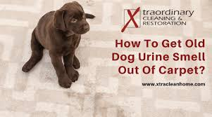 pet odor removal archives