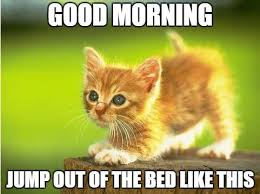 Image result for kitten crazy in the morning