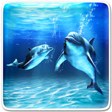 sea dolphin live wallpaper android art lwp