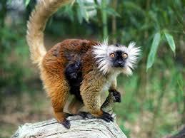 hd backgrounds pixelstalk free monkey