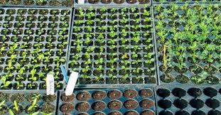 start seedlings indoors like a pro