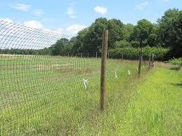 Ohio High Fence Deer Hunts Outdoor Life