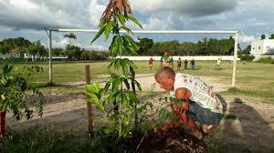 Em Codó, Alcimar Amaral realiza plantio de árvores no campo do Tiro de  Guerra - Blog do Marco Silva