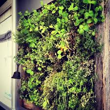 herb walls a fresh take on the living