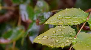 Darmowy obraz: deszcz, Natura, flora, liść, środowisko, zbliżenie ...