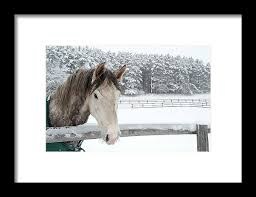Horse Looking Over Fence During Snow Framed Print by © Brigitte Smith