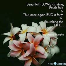 beautiful flower shrinks quotes writings by parul chawda