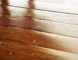 cat urine odor out of wood floors