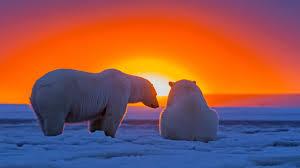 polar bear wallpapers desktop 2560x1440