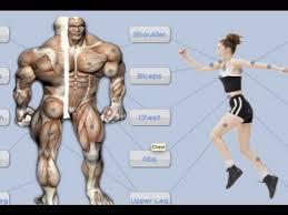 y android workout app jefit