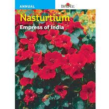 bur nasturtium empress of india seed