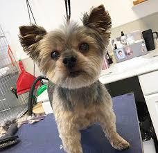 Dog & Cat Grooming Service   Tender Care Animal Hospital