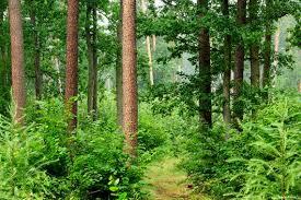 Lasy w Polsce - WLIN