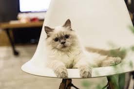cute cat decor house kitten kitty