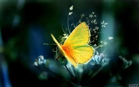 استمتع بألوان الفراشات صور متنوعة مجموعة ورقات