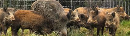 Hog Wire Fence Galvanized Wild Hog Fence By Stay Tuff