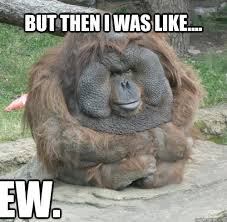 very funny monkey meme photos and pictures