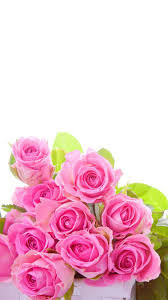 pink roses flower wallpaper for iphone