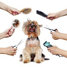 Services - Dandy Dogs Mobile Dog Grooming