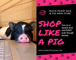 Shop Like A Pig The Ampa Store Free Ampa American Mini Pig Association Facebook