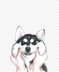 siberian husky iphone x wallpaper png
