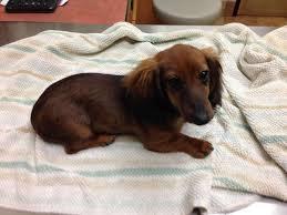 slain dachshund file lawsuit against