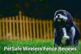 3 Petsafe Wireless Fence Reviews You Need To Read Herepup