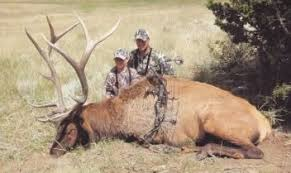 6 Day New Mexico Private Land Bull Elk Archery Hunt For 1 Hunter