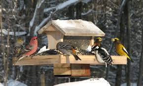 Image result for birds at a feeder