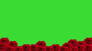 roses falling stock fooe