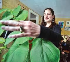 Empowerment through herbalism   The Brattleboro Reformer   Brattleboro  Breaking News, Sports, Weather, Traffic