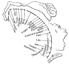 cortical vs subcortical