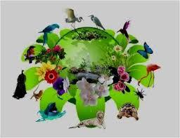 Всеукраїнська акція «День юного натураліста» - Методичний кабінет