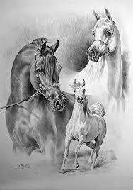 Horses Paard Tekeningen Dieren Tekenen Paarden