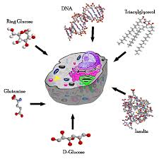 Los Bloques Fundamentales de Biología | CancerQuest