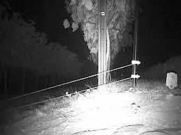 Fox Raccoon Electric Fence And Netting Youtube