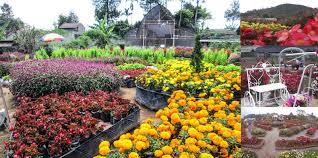 solid gold berjangka kebun bungan terindah •
