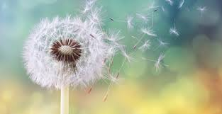 In a Word: Dandelion | The Saturday Evening Post