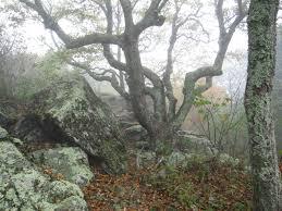 Shenandoah Bearfence Mountain Ktnp Blog