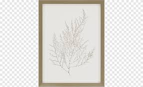 Frames Wall Decal Painting Mirror Graphy Molding Glass White Png Pngegg