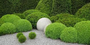 20 Best Boxwood Shrubs To Plant Boxwood Bush And Hedge Ideas