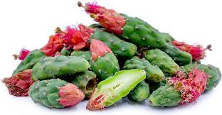 nopales cactus buds information and facts